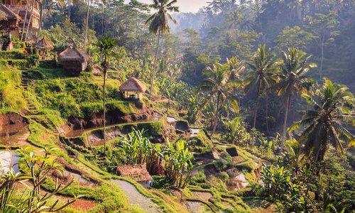 Bali : Ubud