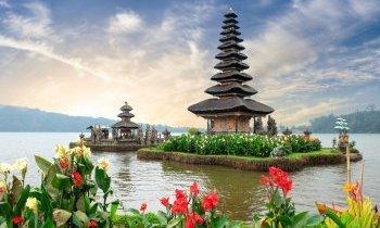 Bali : Les rizières