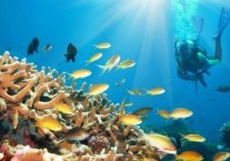 Plongée aux Bahamas, The Blue Hole