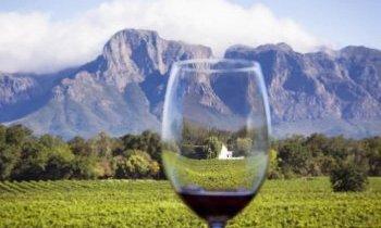 A la découverte des vignobles d'Afrique du Sud