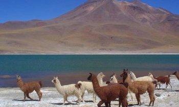Chili, le désert d'Atacama