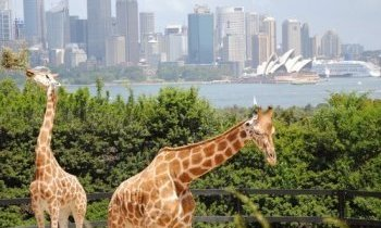 Sydney : Taronga Zoo