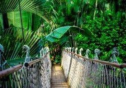 Découvrez la forêt amazonienne