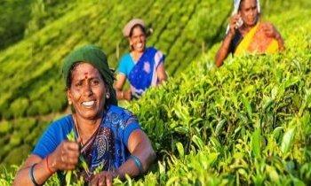 Jours tranquilles au Kerala