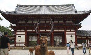 Nara, Le Berceau du Japon