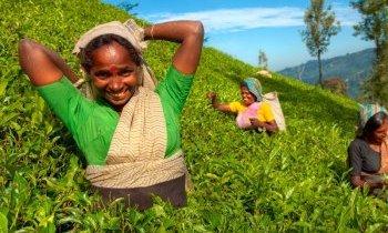 Vacances de Noel en Inde du sud