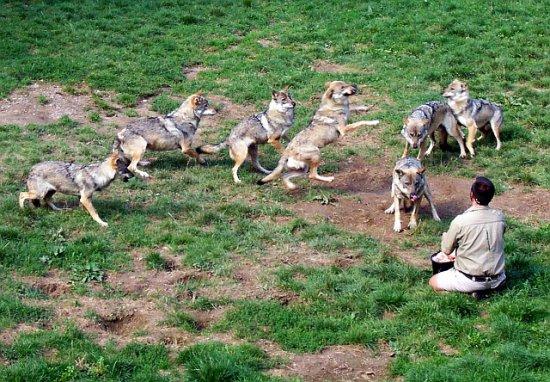 Parc des loups à Courzieu
